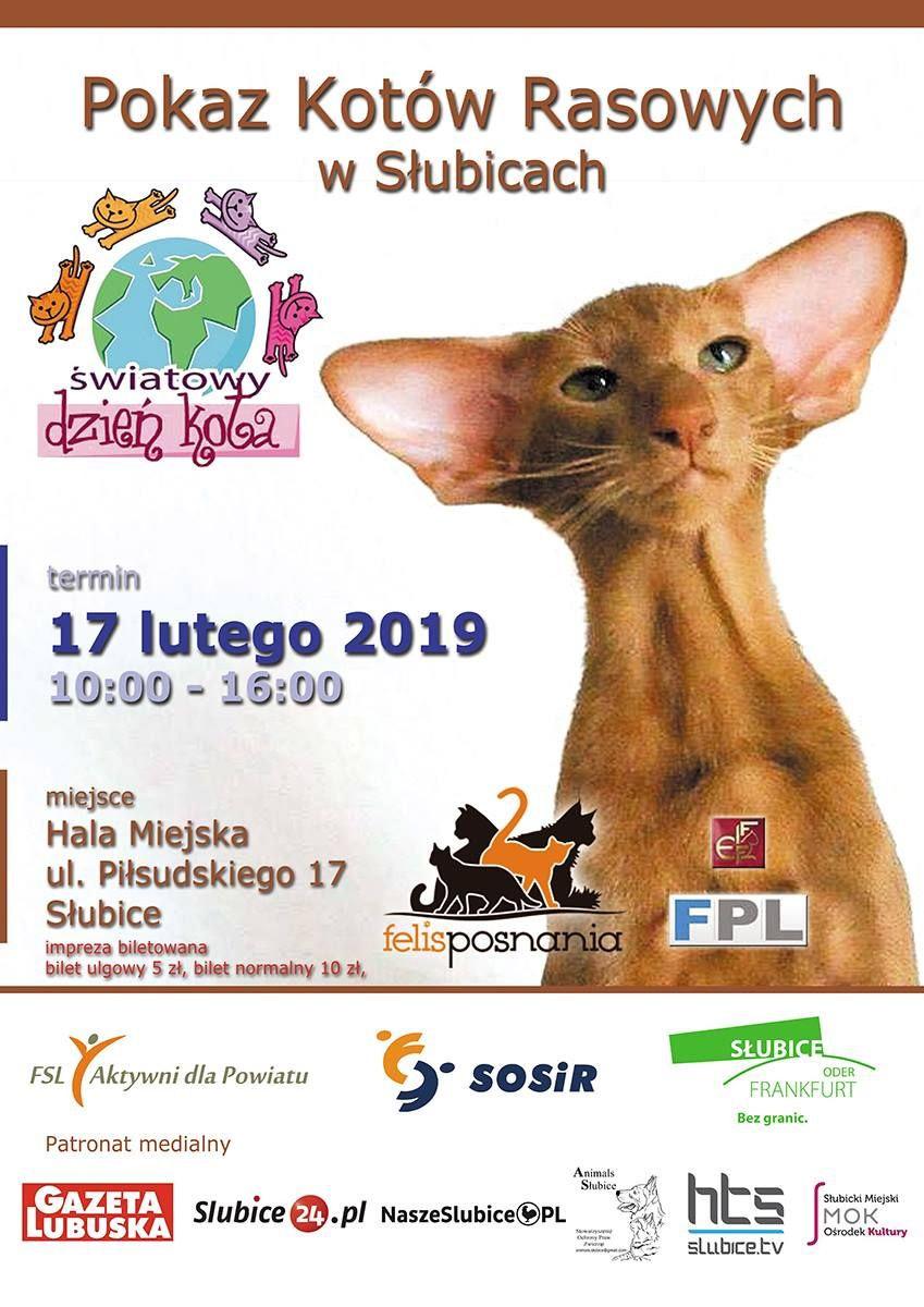 Ilustracja do informacji: Zapraszamy na wystawę kotów rasowych