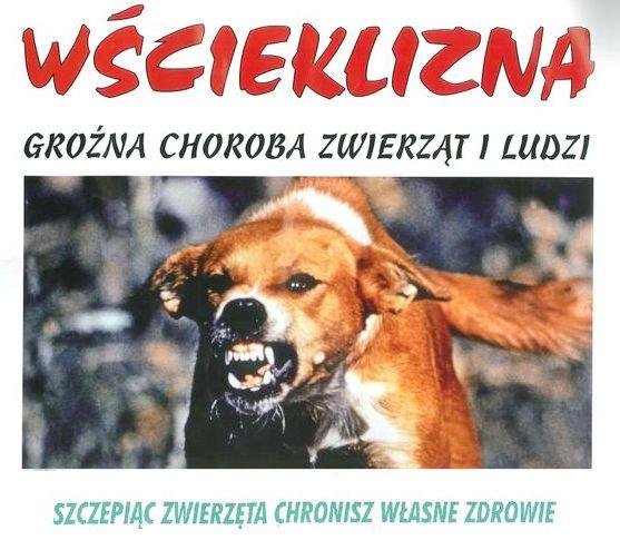 Ilustracja do informacji: Uwaga - obowiązkowe szczepienia zwierząt przeciwko wściekliźnie!